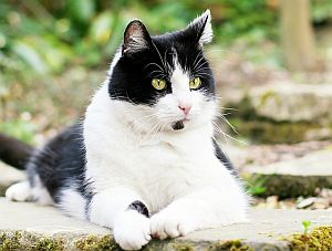 Bild: Katze im Freien